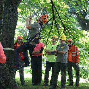 Baltijas valstu kokā kāpšanas čempionāts 2014 Igaunijā